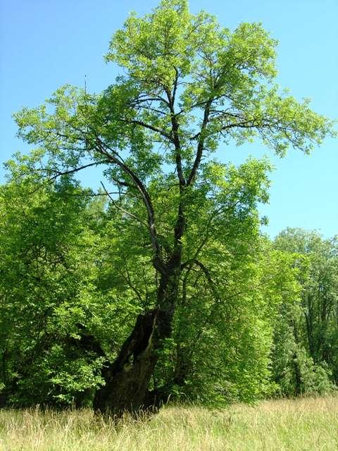 Emmett's Tree
